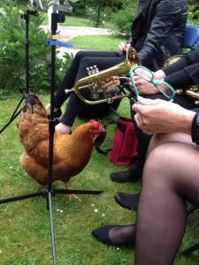 De Epema kippen zoeken gezelschap bij de bugelsectie, toeval?